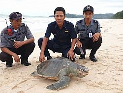 Sea turtle found dead on Bang Tao Beach