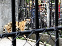 No animal cruelty at Phuket Zoo, say officials