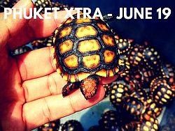 PHUKET XTRA: VIDEO: Pay fines at 7-Eleven? 4,500 baby turtles seized! Hotel drug raids? || June 19
