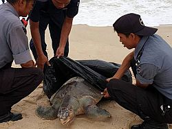 Fishing activities suspected in killing turtle, says expert