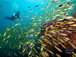 Sirolodive Scuba Diving Phuket