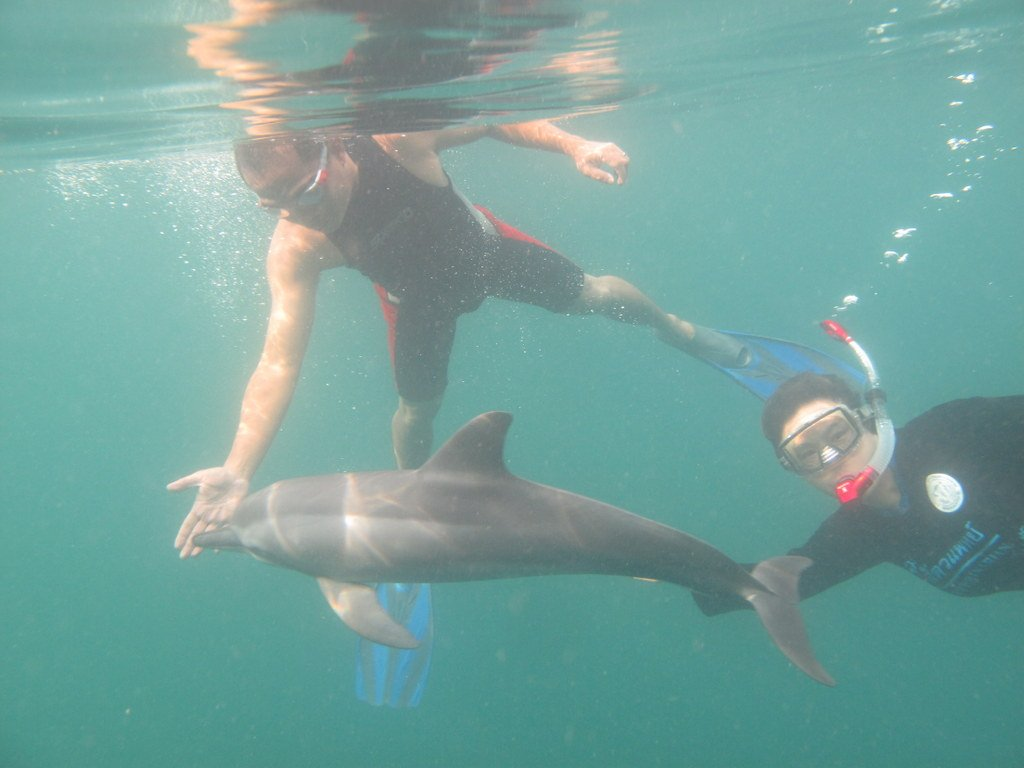 This dolphin used to like swimming with humans for warmth.