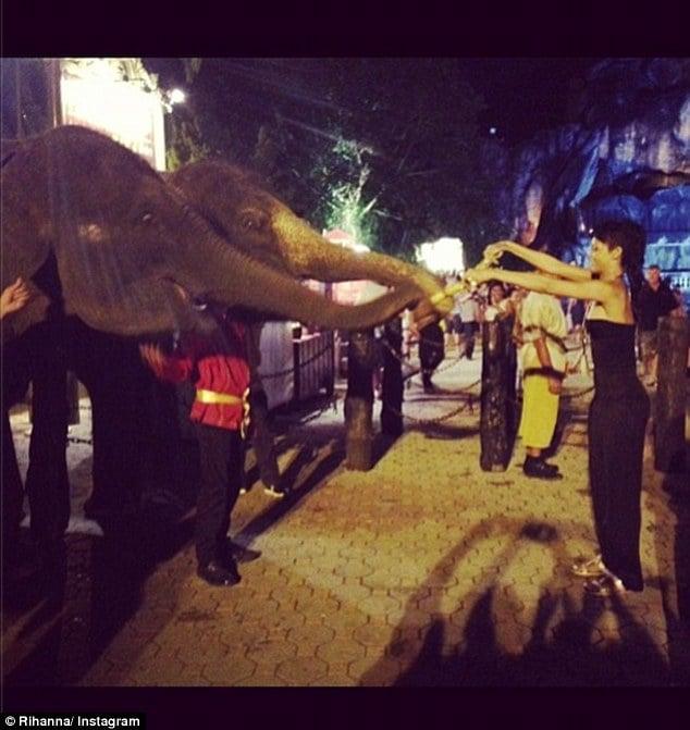 Rihanna with elephants.
