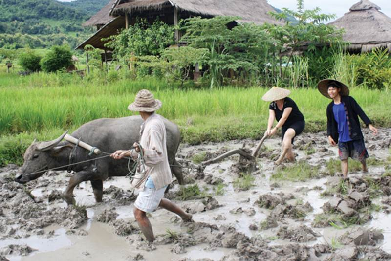 Learning the art of rice farming in Laos
