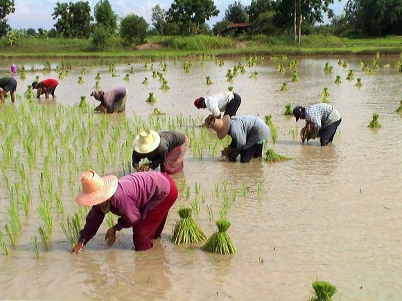 Clean crops for climate change