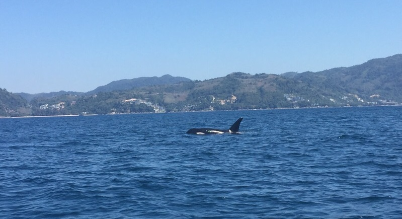 The Orca was sighted just off Freedom Beach. Photo: Joe Halleron
