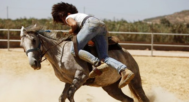 Lone Arab Woman Takes The Reins To Tame Horses On The Golan