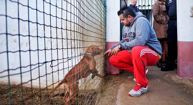 A prisoner at the high security prison of Monsanto touches a dog at the prison's dog kennel in Lisbon. Photo: Patricia De Melo Moreira/AFP
