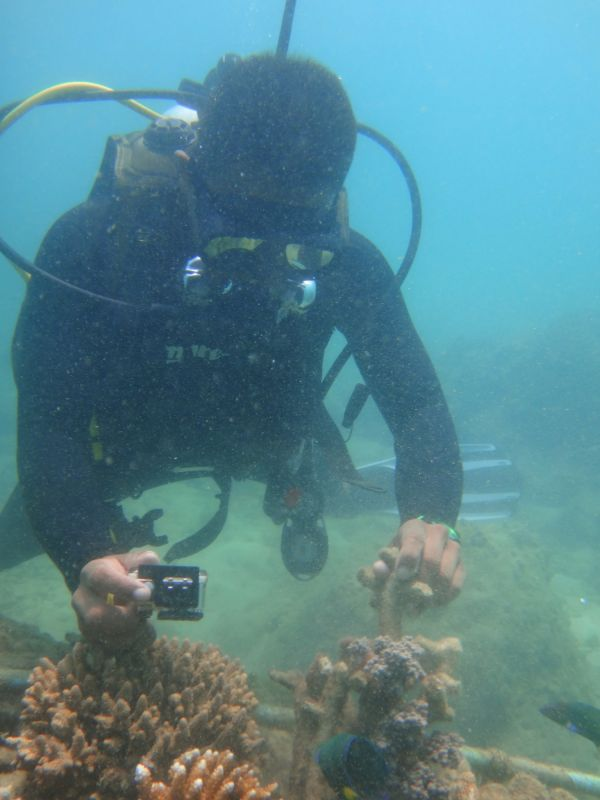On Wednesday, Asst Prof Thon posted photos which are believed to show a tour guide breaking off a piece of coral from a reef and using it to smash a sea urchin. Photo: Maxmillion