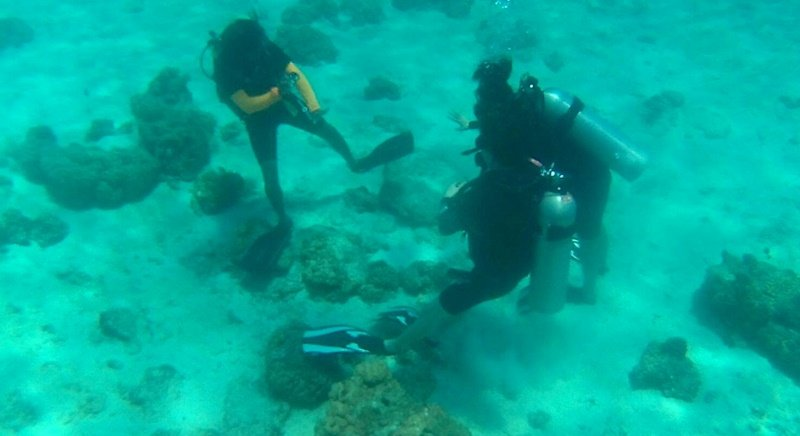 A photo showing Mr Nattha and the tourists walking on the coral reefs. Photo: Khanchit Klingklip
