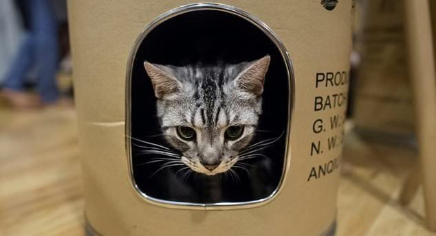 Inside Yangon's 'Catpuchino Cafe' dozens of felines lounge around the room. Photo: AFP
