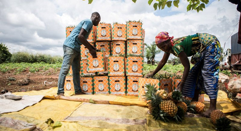Benin pineapples make comeback after eight-month self-imposed absence