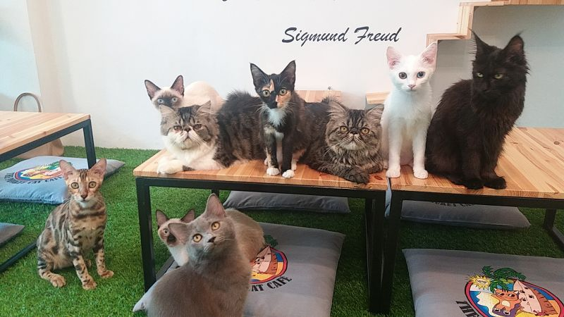 New cat café for sale