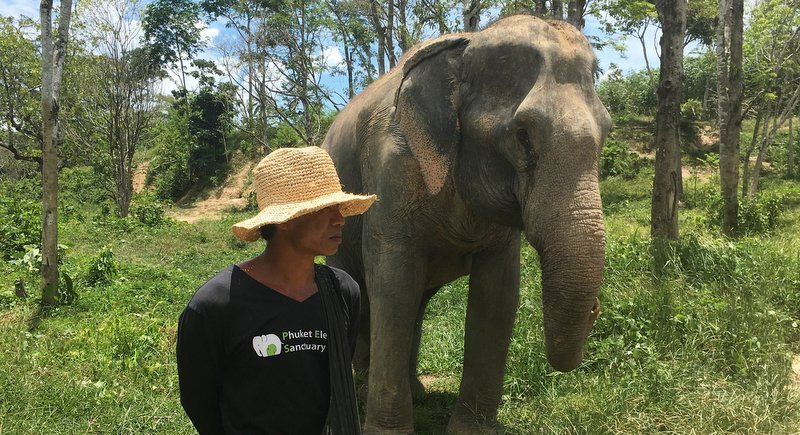 The Phuket Elephant Sanctuary is a champion for the ethical treatment of ex-working elephants. Photo: Amy Bensema