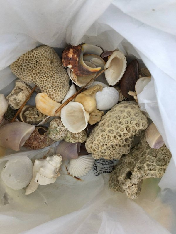 Russian woman Liliya Karmanova, 20, has been charged for possession of the handful of dead corals. Photo: DMCR
