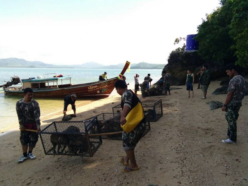 The monkeys were released on Koh Payu at 8am today by  Director of the Khao Phra Thaew Natural and Wildlife Education Centre Pongchart Chouehorm, and other relevant government officials. Photo: PR Dept