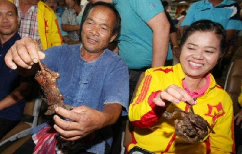Srisaket Sor Rungvisai's parents with grilled rat and fried pigeon at Suvarnabhumi airport in February. Photo: Apichit Jinakul / Bangkok Post