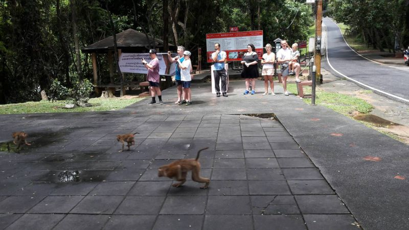 A total of 128 monkeys have already been been re-released into the wild.. Photo: Phuket Provinical Office