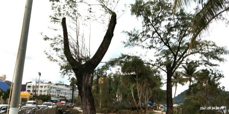 The trees were cut down for safety reasons, explained Patong Mayor Chalermluck Kebsup. Photo: Supplied