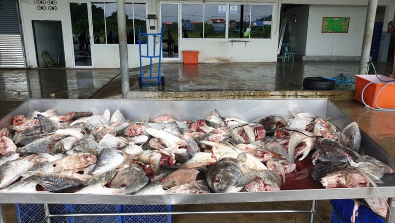 Top Phuket frozen seafood factory shut down, managing director arrested