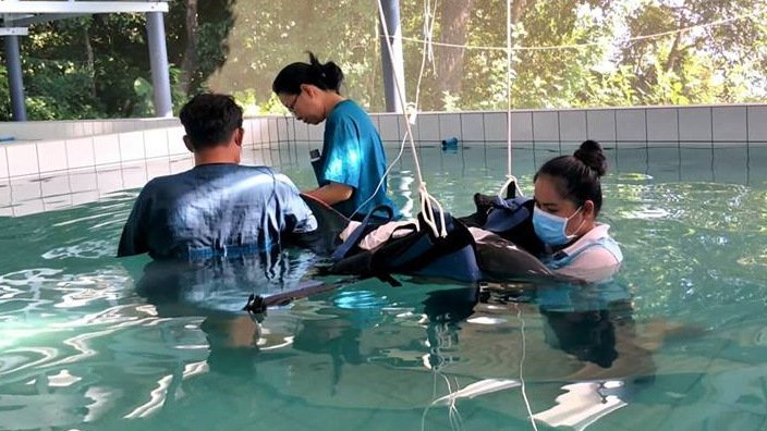 Dolphin in care dies, Phuket marine experts now question 'plastic'