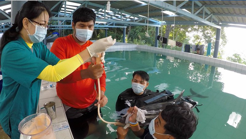 The dolphin has died of 'natural causes', experts say. Photo: ThaiWhales