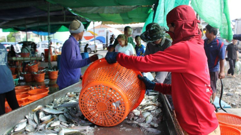 Phuket's fishing industry praises lifting of EU 'yellow card'