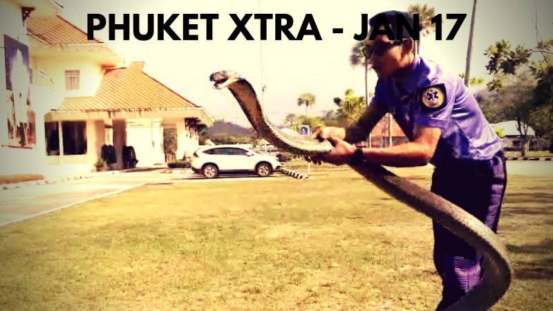 PHUKET XTRA: VIDEO: Bare hands catch cobra! Cow still missing? Filthy Bangkok air! || Jan. 17