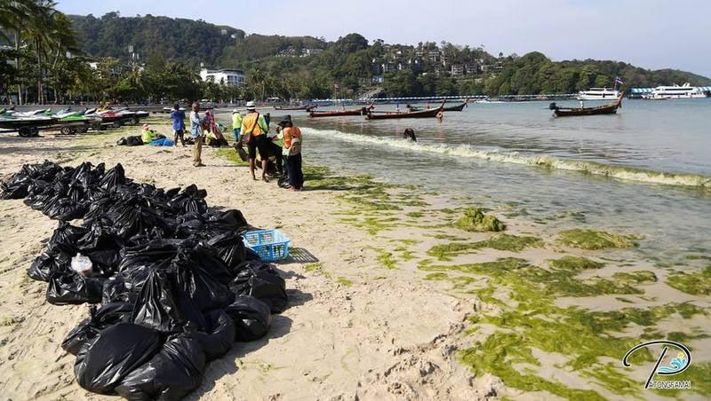 Patong seaweed 'safe' says expert