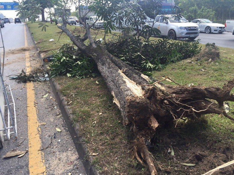 The ice truck levelled the tree on the central reservation. Photo: Kusoldharm Foundation