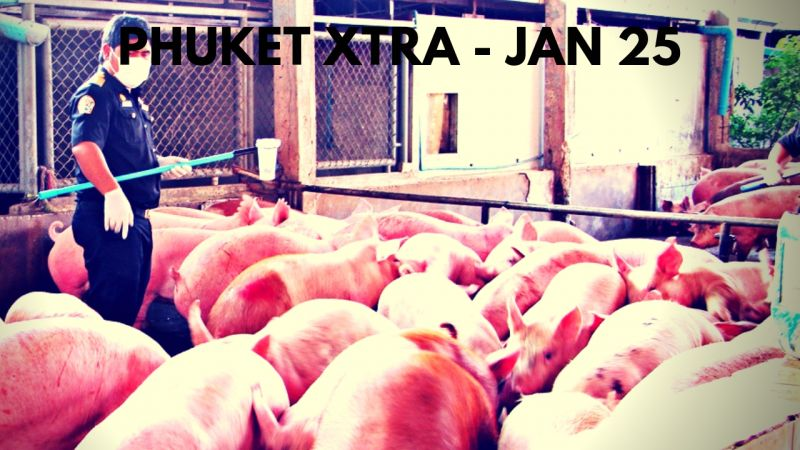 PHUKET XTRA: VIDEO: Preventing African Swine Flu? Another Southern bombing? Fighting forced evictions! || Jan. 25