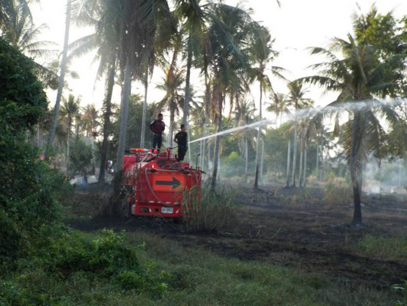 The fire along the Cherng Talay – Baan Don Rd in Thalang scorched about three rai of the coconut plantation. Photo: Eakkapop Thongtub