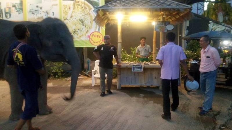 Baby elephants at shopping plaza raise concerns