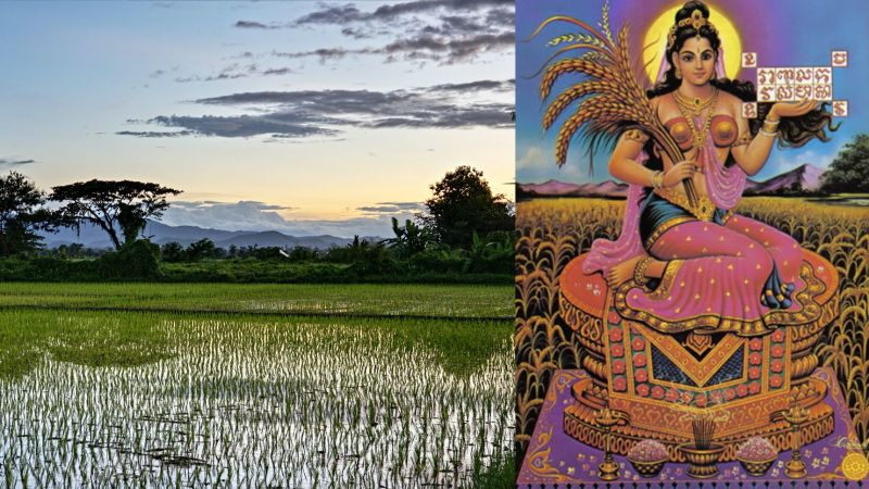 The myth of Mae Phosop, rice goddess of Thailand