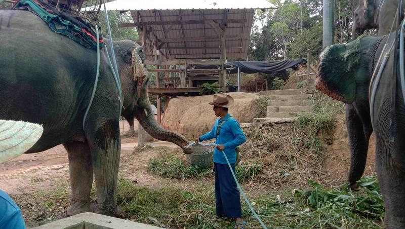 Govt clarifies elephant export regulation
