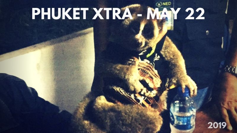 PHUKET XTRA: VIDEO: Slow loris rescued! Head-on collision! Roommates: soldiers, villagers? || May 22