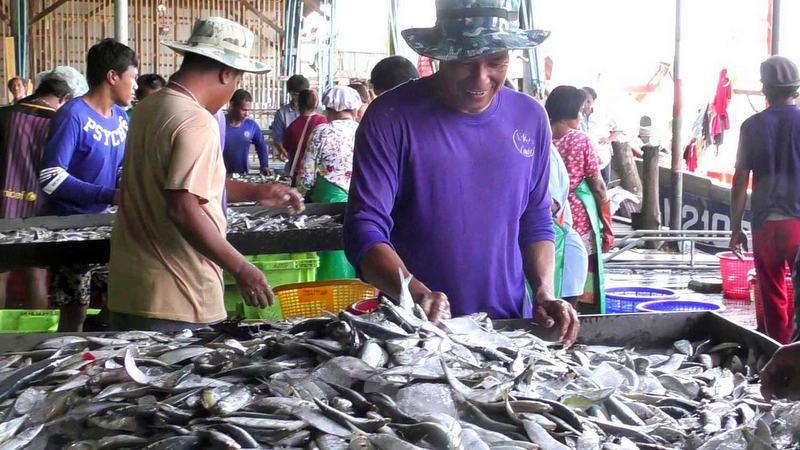 Microplastic waste found in Trang mackerel