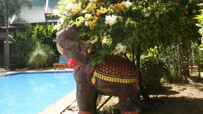 An elephant sits by the decidedly tempting pool.