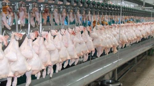 Chicken exports to China increases 700% amid swine fever outbreak