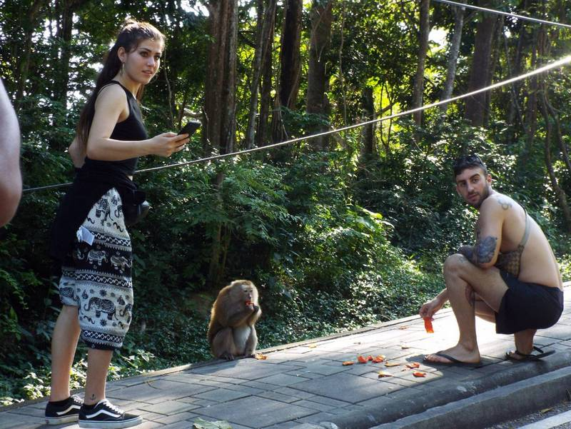 Tourist Police will request more signs be posted to warn tourists of closely engaing with the wild monkeys at Toh Sae Hill in Phuket Town. Photo: Eakkapop Thongtub