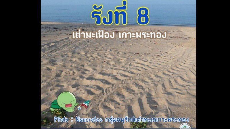 Turtle tracks at Koh Phra Thong spur hopes of new nest