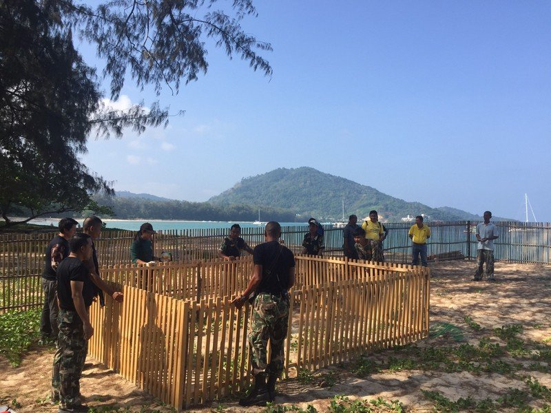 The turtle eggs were moved to a safer location on Nai Yang Beach where park officers can watch over them. Photo: Sirinath National Park