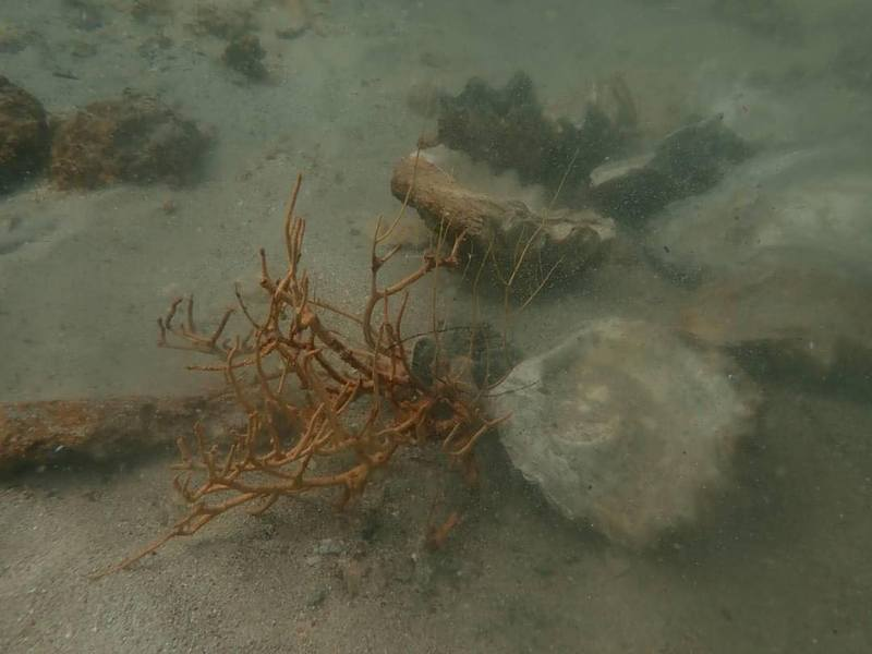 Many corals at the popular dive site were damaged in the collapse. Photo: DNP