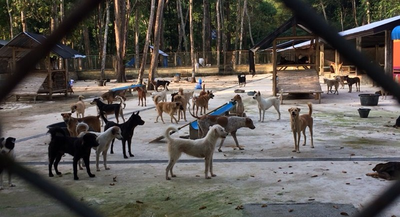 Phuket officials look to install animal shelters at all municipalities