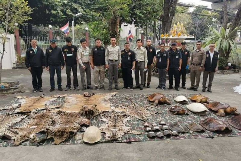 Wildlife officials and police display the items seized from the hotel. Photo: Natural Resources and Environmental Crime Suppression Division