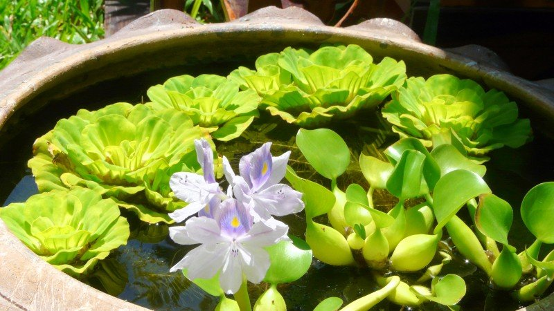 Green Thoughts: The beauty of floaters with an accent