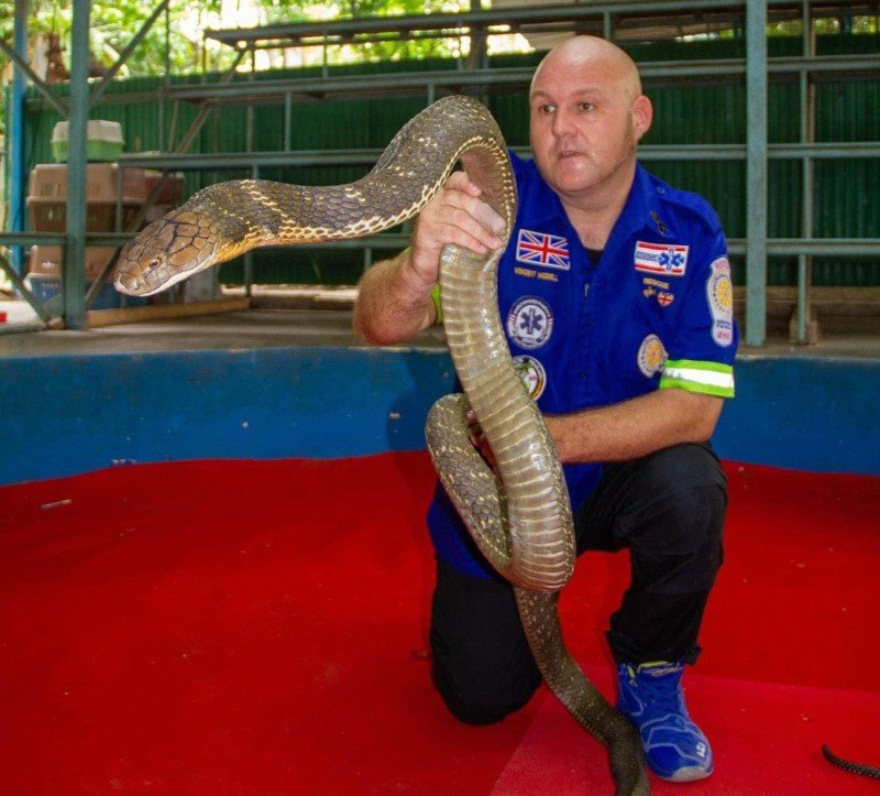 Vinnie pictured with a large king cobra, which he maintains should not be removed from the wild to ensure populations of more dangerous snakes do not grow. Photo: Vinnie Modell