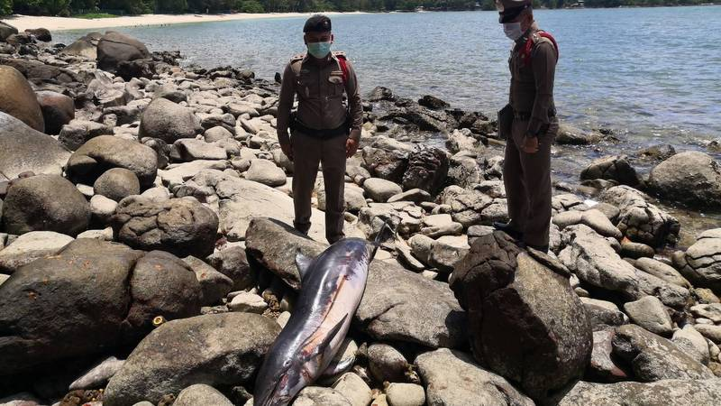 Young dolphin found dead at Tri Trang