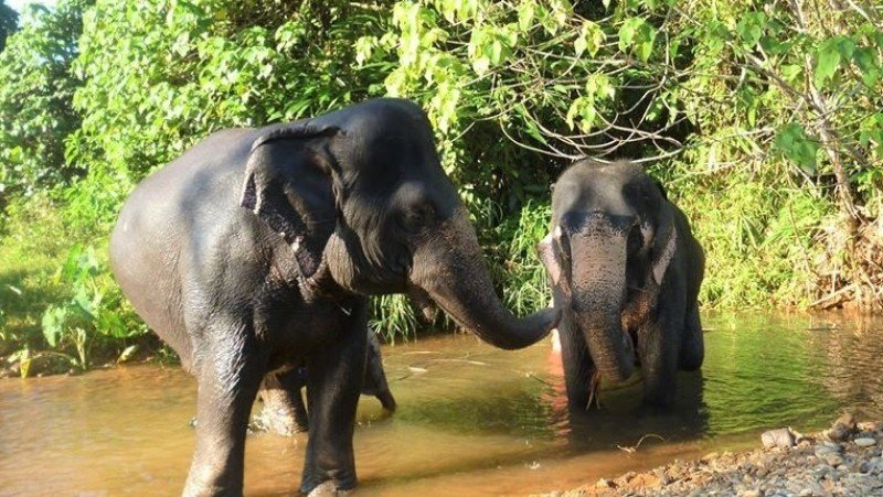 STEF keeps up the work to help elephants as COVID impact continues