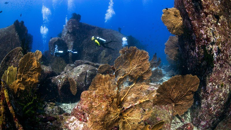 Sealed tours urgent to save Phuket's dive industry
